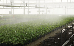 how to build a propagation mist system