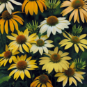 Thumb_echinacea_mellowyellows_fp